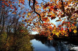 800px-Fall-tree-branch-leaves-along-river_-_Virginia_-_ForestWander