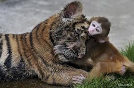 compassion2